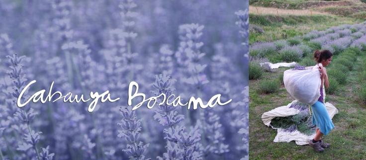 jardi-medicinal-lavanda_Cabanya-Boscana